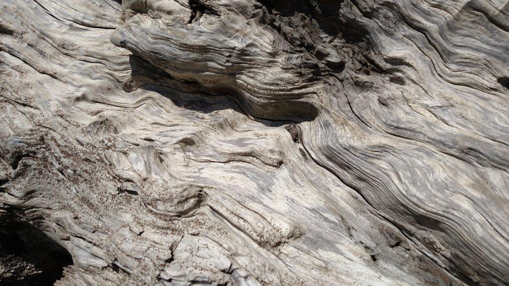 Beautiful Swirly Driftwood